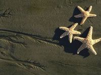 3 Starfish on Beach